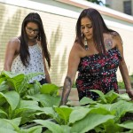 ANDREW RYAN / WINNIPEG FREE PRESS Raven Hart, right, and Reanna Merasty pick weeds from the tobacco part of Marymound's cultural programs. Shot on June 26, 2018.